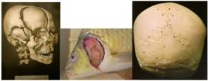 cranium and fish